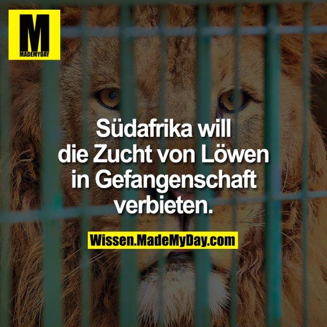 Südafrika will die Zucht von Löwen in Gefangenschaft verbieten.
