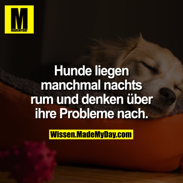 Hunde liegen manchmal nachts rum und denken über ihre Probleme nach.