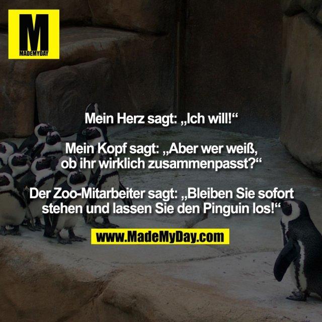 """Mein Herz sagt: """"Ich will!""""<br /> <br /> Mein Kopf sagt: """"Aber wer weiß,<br /> ob ihr wirklich zusammenpasst?""""<br /> <br /> Der Zoo-Mitarbeiter sagt: """"Bleiben Sie sofort<br /> stehen und lassen Sie den Pinguin los!"""""""