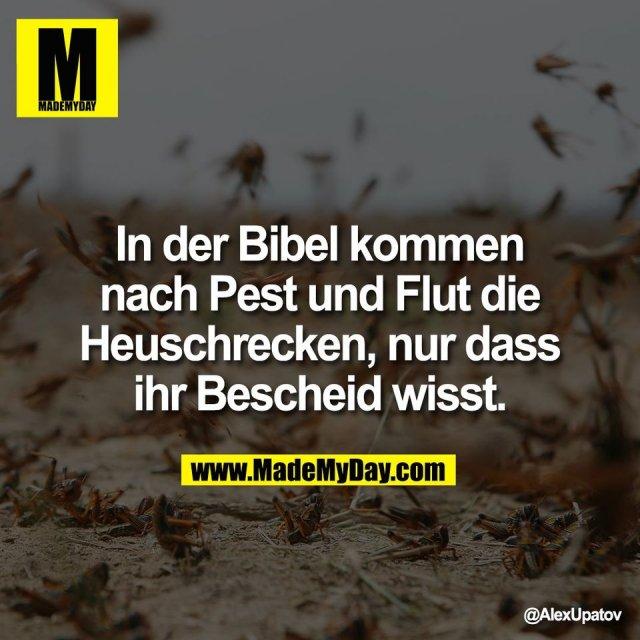 In der Bibel kommen<br /> nach Pest und Flut die<br /> Heuschrecken, nur dass<br /> ihr Bescheid wisst.