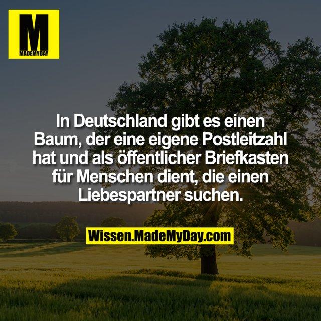 In Deutschland gibt es einen Baum, der eine eigene Postleitzahl hat und als öffentlicher Briefkasten für Menschen dient, die einen Liebespartner suchen.