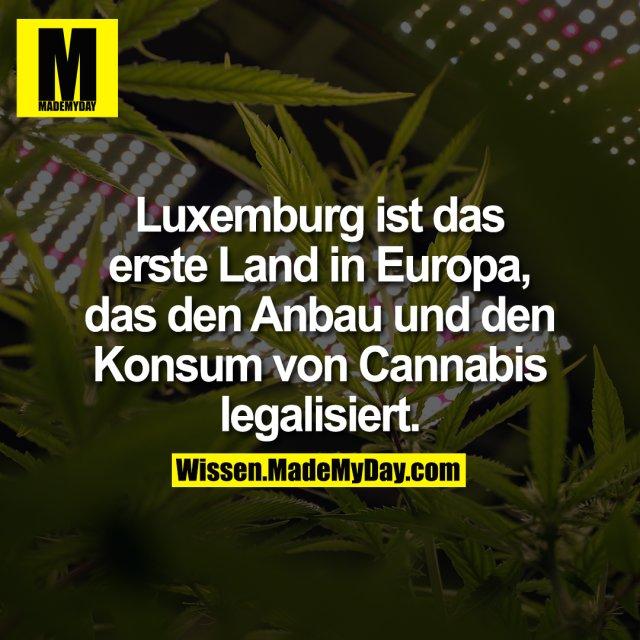 Luxemburg ist das erste Land in Europa, das den Anbau und den Konsum von Cannabis legalisiert.