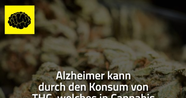 Alzheimer Kann Durch Den Konsum Made My Day
