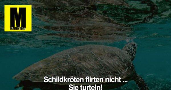 will not Single Männer Erbach zum Flirten und Verlieben consider, that you